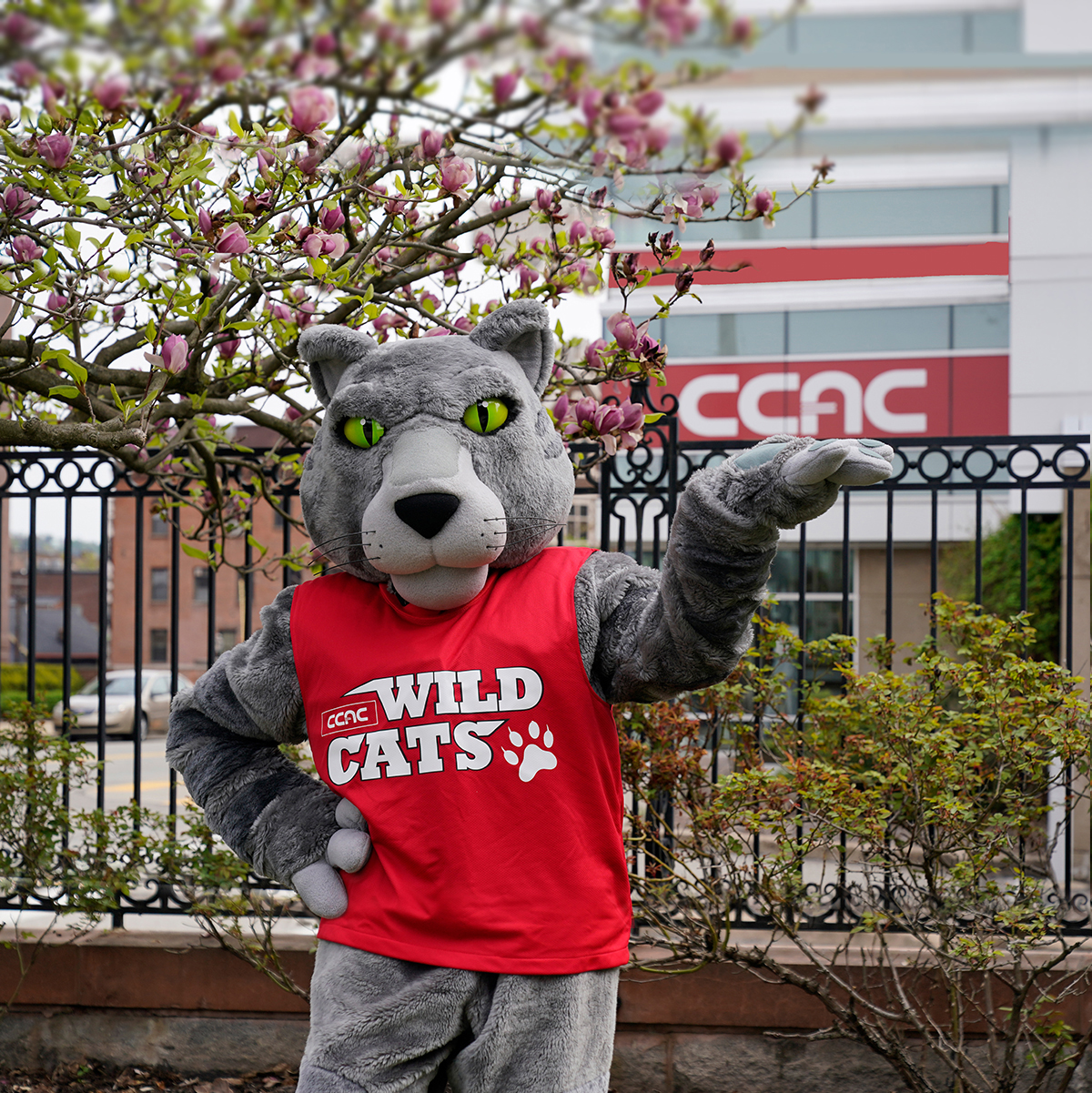 Picture of the college mascot, Ace!