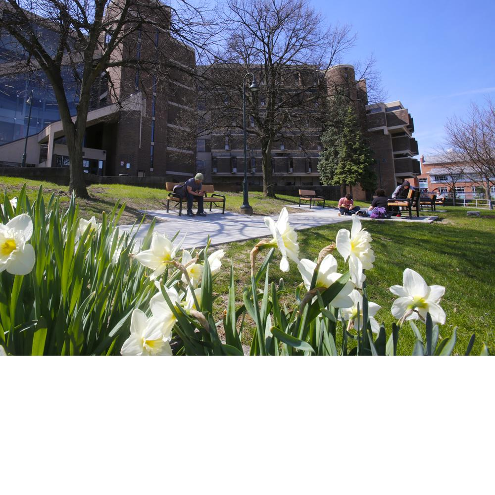 Flowers in foreground against background campus building